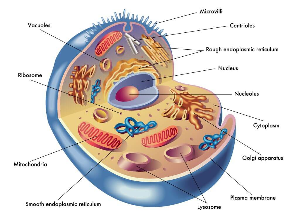 What Is a Cell for Kids